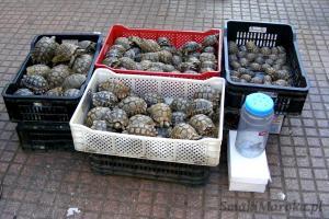 Żółwie na sprzedaż, Souk w Rabacie
