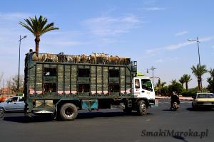 Transport baranów na souk, Marrakesz
